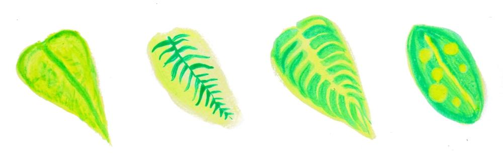 BotanicGardenIllustration.jpg